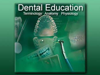Dental Education: Terminology, Anatomy, Physiology